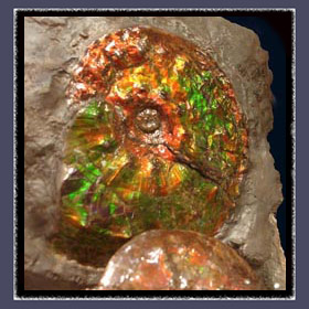 Gemstone Ammolite embedded in Matrix Rock